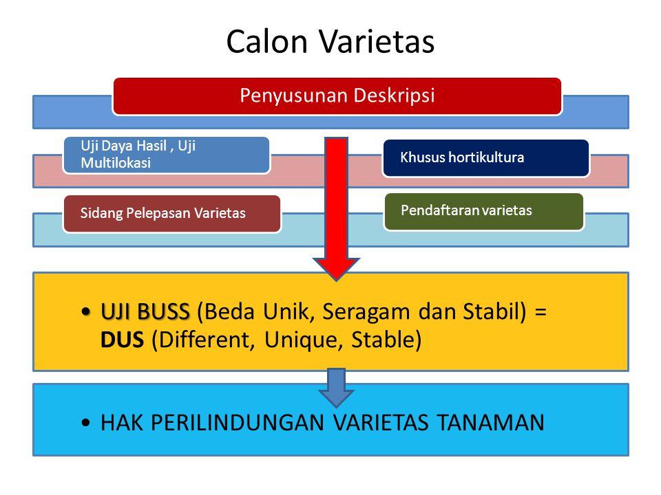 Calon Varietas Penyusunan Deskripsi Uji Daya Hasil, Uji Multilokasi Sidang Pelepasan Varietas UJI BUSSUJI BUSS (Beda Unik, Seragam dan Stabil) = DUS (