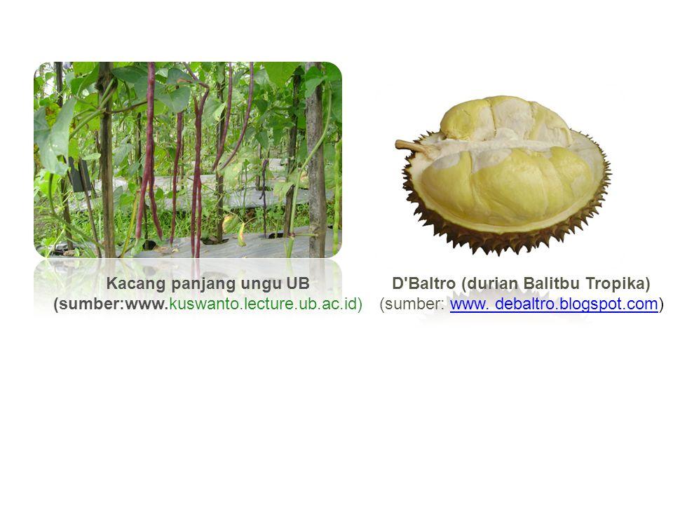 Kacang panjang ungu UB (sumber:www.kuswanto.lecture.ub.ac.id) D'Baltro (durian Balitbu Tropika) (sumber: www. debaltro.blogspot.com)www. debaltro.blog