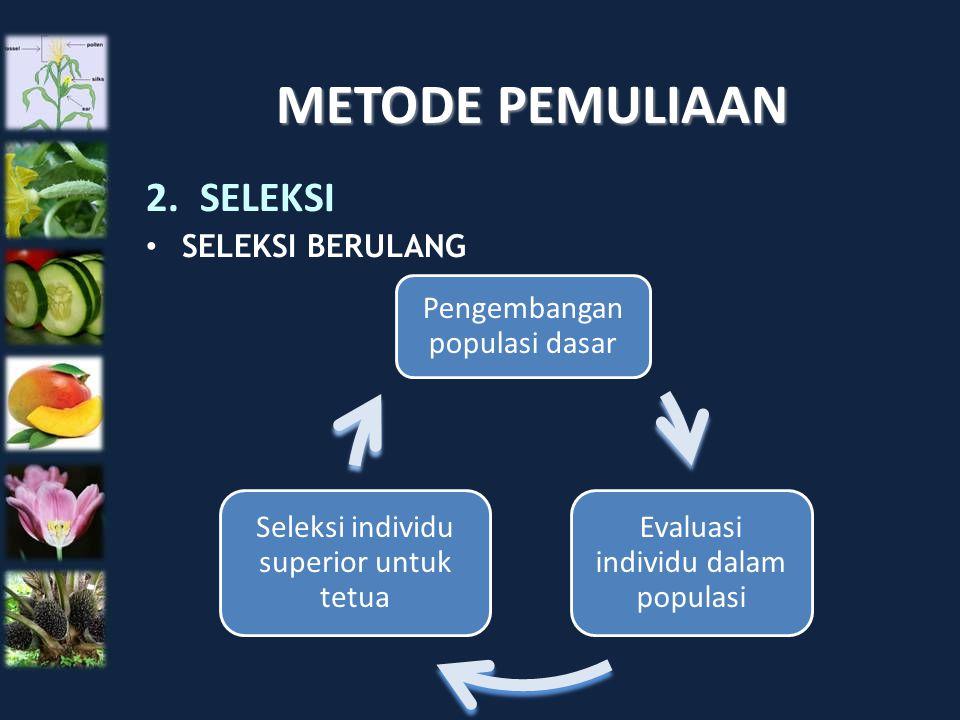 METODE PEMULIAAN 2.SELEKSI SELEKSI BERULANG Pengembangan populasi dasar Evaluasi individu dalam populasi Seleksi individu superior untuk tetua