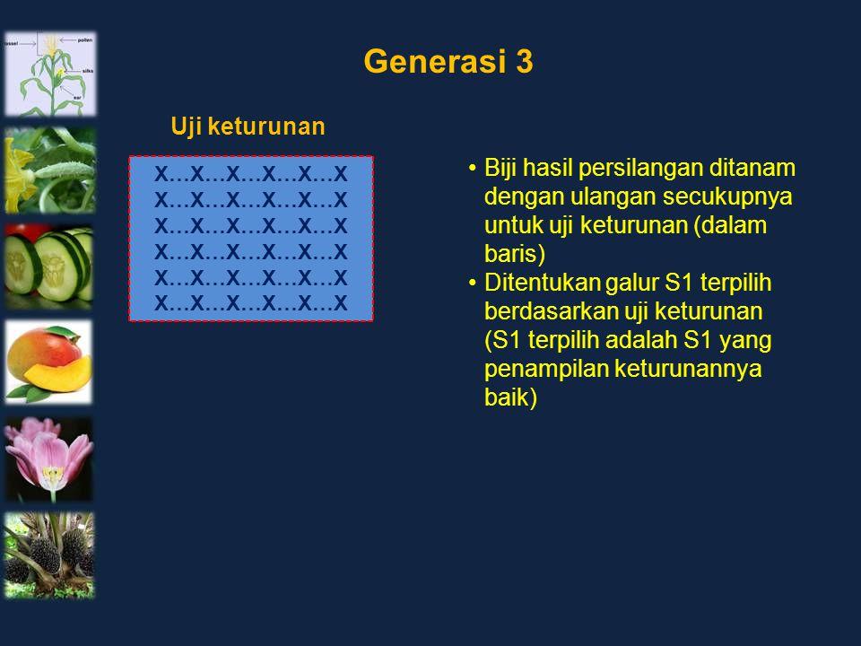 X…X…X…X…X…X Uji keturunan Generasi 3 Biji hasil persilangan ditanam dengan ulangan secukupnya untuk uji keturunan (dalam baris) Ditentukan galur S1 te