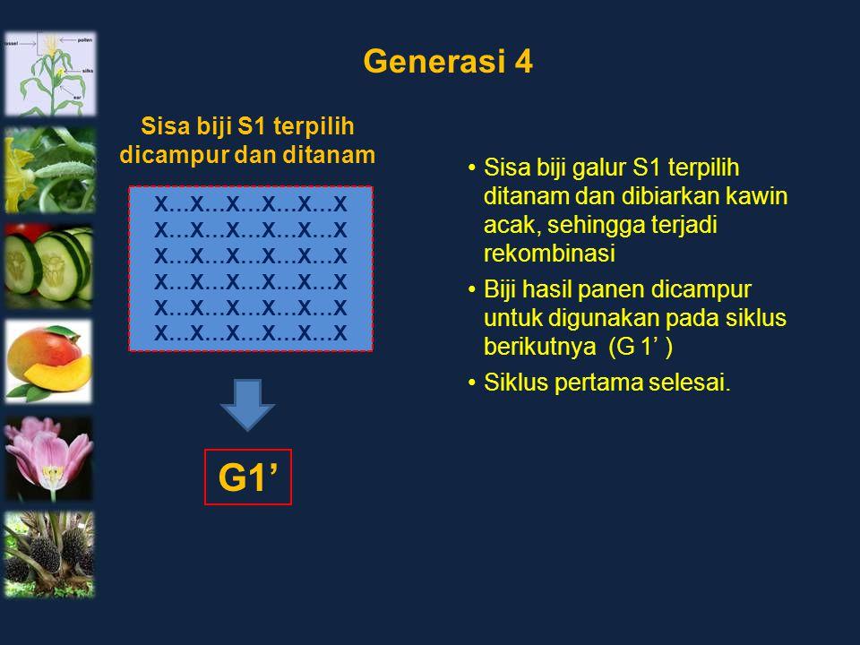 X…X…X…X…X…X Sisa biji S1 terpilih dicampur dan ditanam Generasi 4 Sisa biji galur S1 terpilih ditanam dan dibiarkan kawin acak, sehingga terjadi rekom
