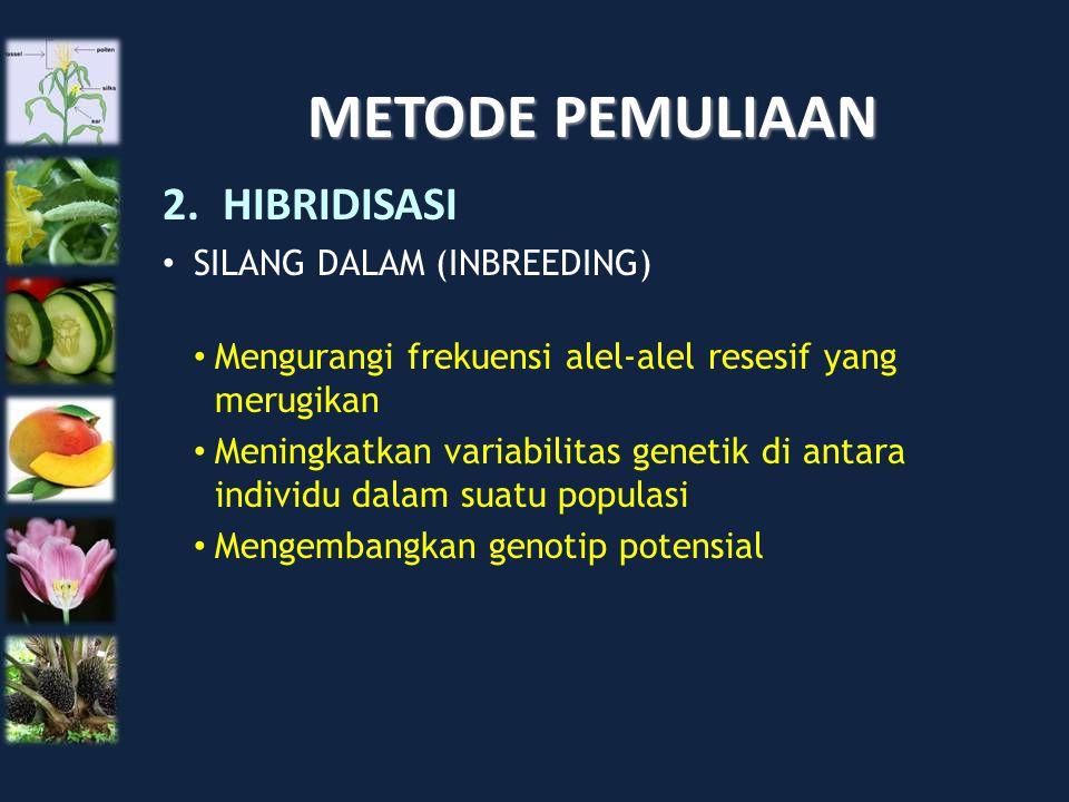 METODE PEMULIAAN 2.HIBRIDISASI SILANG DALAM (INBREEDING) Mengurangi frekuensi alel-alel resesif yang merugikan Meningkatkan variabilitas genetik di an