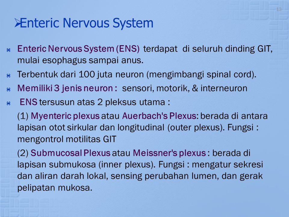 13   Enteric Nervous System  Enteric Nervous System (ENS) terdapat di seluruh dinding GIT, mulai esophagus sampai anus.  Terbentuk dari 100 juta n