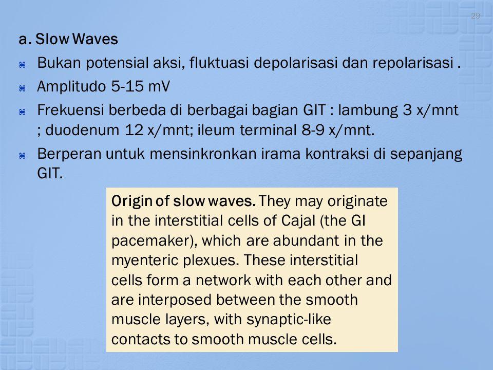 29 a. Slow Waves  Bukan potensial aksi, fluktuasi depolarisasi dan repolarisasi.  Amplitudo 5-15 mV  Frekuensi berbeda di berbagai bagian GIT : lam