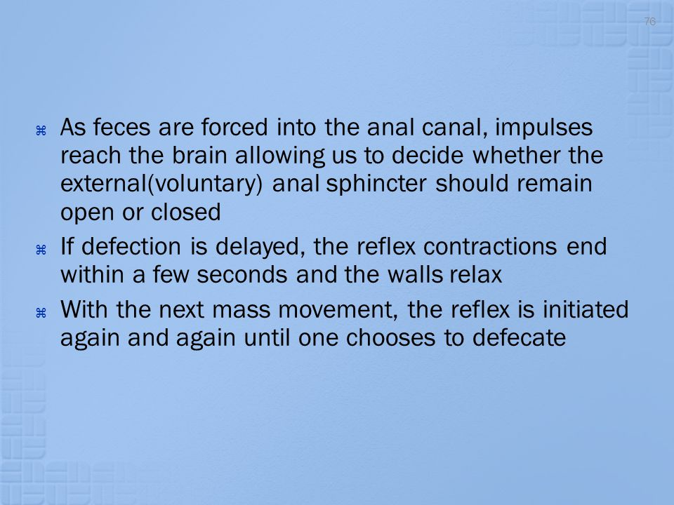  As feces are forced into the anal canal, impulses reach the brain allowing us to decide whether the external(voluntary) anal sphincter should remain