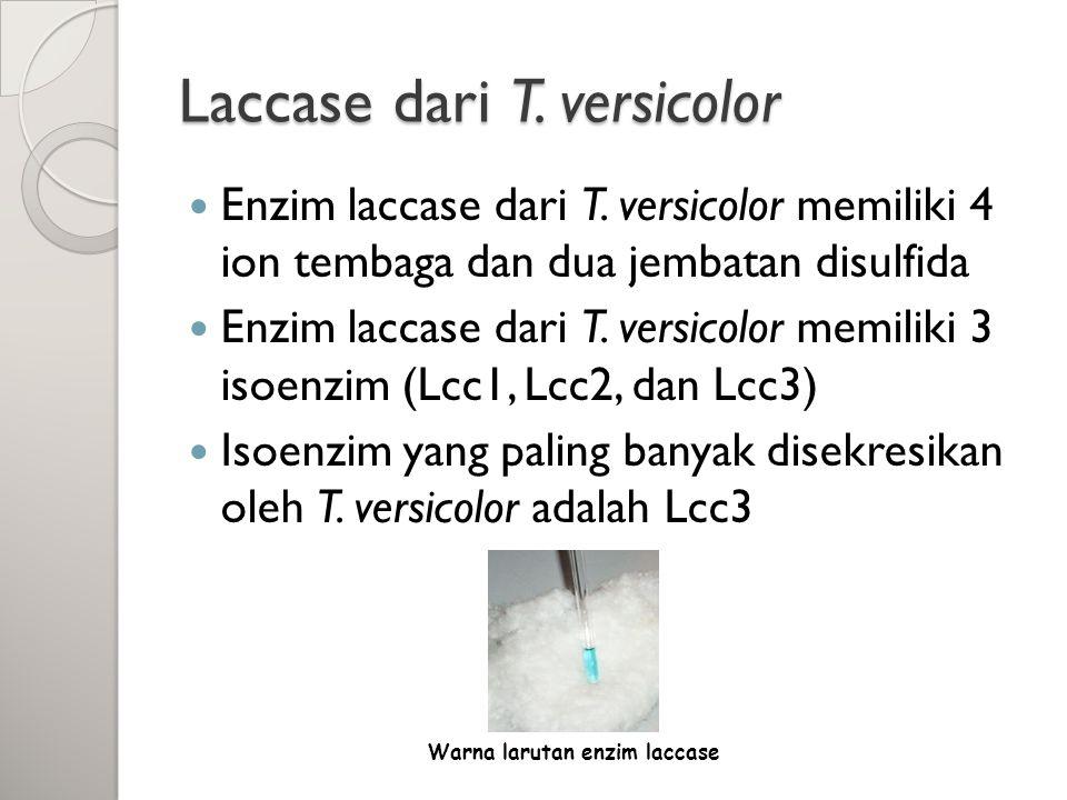 Laccase dari T. versicolor Enzim laccase dari T. versicolor memiliki 4 ion tembaga dan dua jembatan disulfida Enzim laccase dari T. versicolor memilik
