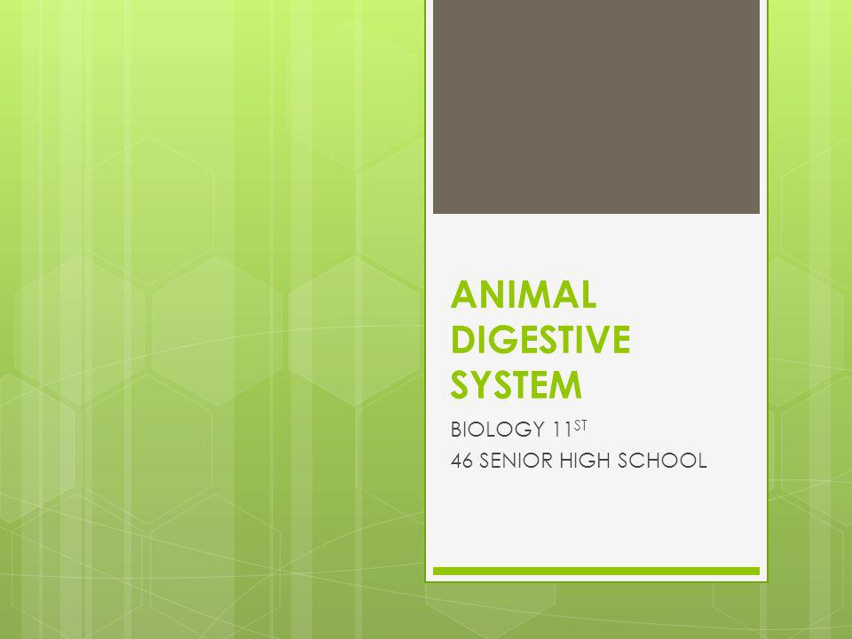 ANIMAL DIGESTIVE SYSTEM BIOLOGY 11 ST 46 SENIOR HIGH SCHOOL