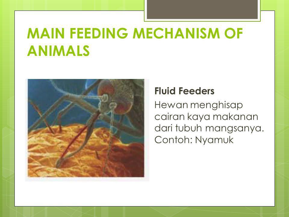 MAIN FEEDING MECHANISM OF ANIMALS Fluid Feeders Hewan menghisap cairan kaya makanan dari tubuh mangsanya. Contoh: Nyamuk