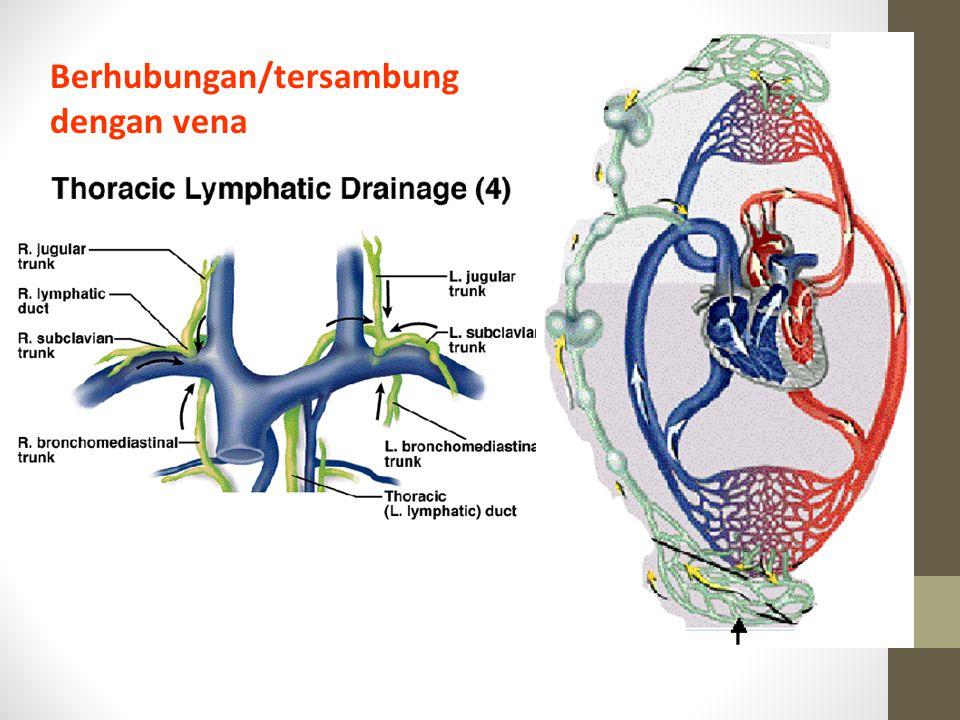 Berhubungan/tersambung dengan vena
