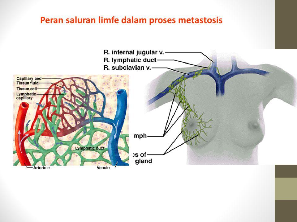 Peran saluran limfe dalam proses metastosis