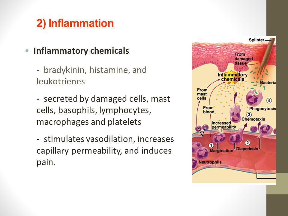 2) Inflammation Inflammatory chemicals - bradykinin, histamine, and leukotrienes - secreted by damaged cells, mast cells, basophils, lymphocytes, macr