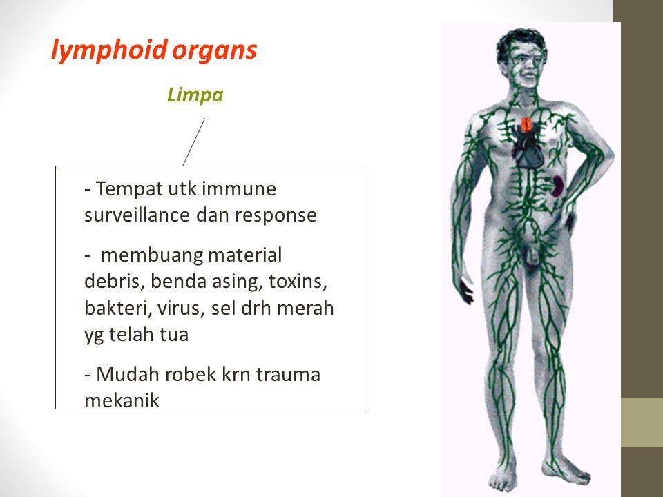 Limpa lymphoid organs - Tempat utk immune surveillance dan response - membuang material debris, benda asing, toxins, bakteri, virus, sel drh merah yg