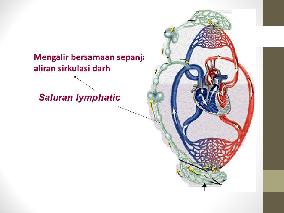 Mengalir bersamaan sepanjang aliran sirkulasi darh Saluran lymphatic