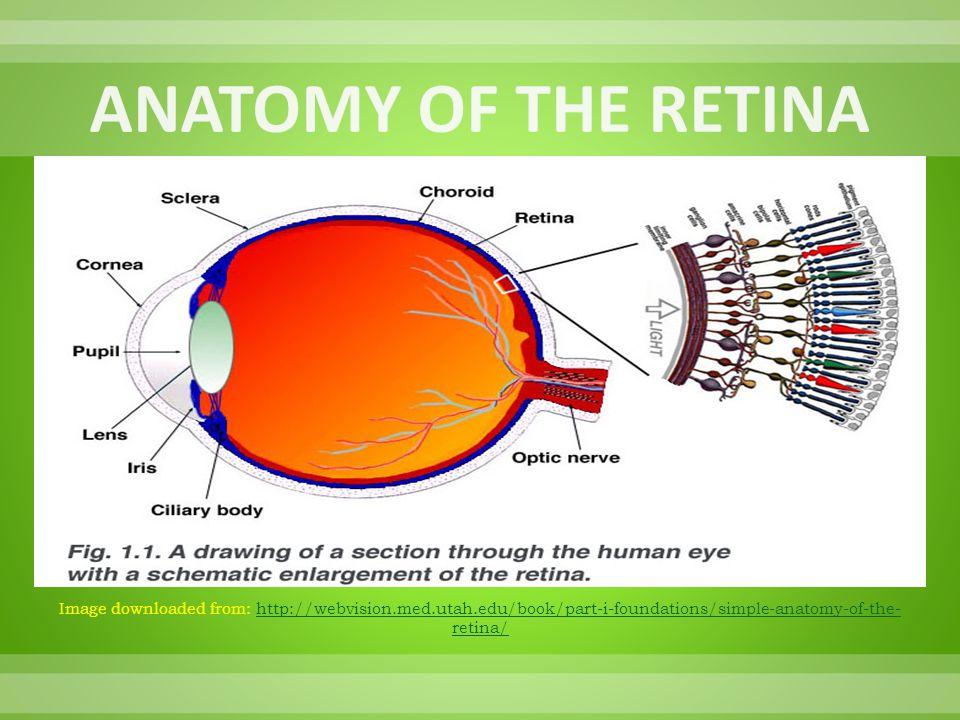 Image downloaded from: www.doctorspiller.comwww.doctorspiller.com