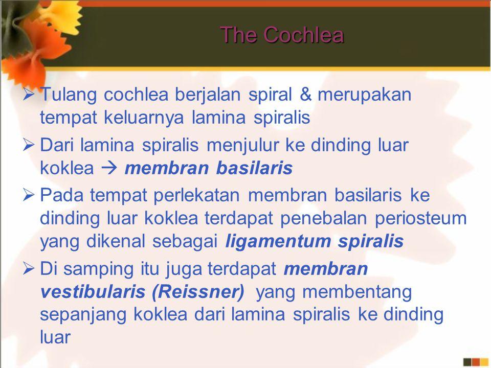 The Cochlea  Tulang cochlea berjalan spiral & merupakan tempat keluarnya lamina spiralis  Dari lamina spiralis menjulur ke dinding luar koklea  membran basilaris  Pada tempat perlekatan membran basilaris ke dinding luar koklea terdapat penebalan periosteum yang dikenal sebagai ligamentum spiralis  Di samping itu juga terdapat membran vestibularis (Reissner) yang membentang sepanjang koklea dari lamina spiralis ke dinding luar
