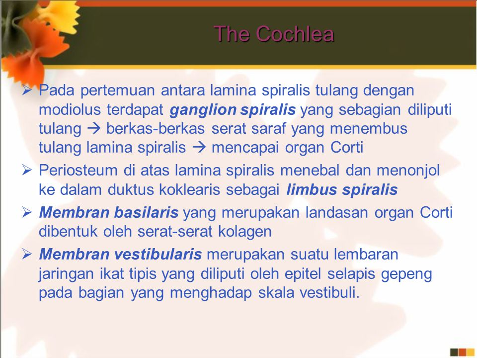 The Cochlea  Pada pertemuan antara lamina spiralis tulang dengan modiolus terdapat ganglion spiralis yang sebagian diliputi tulang  berkas-berkas se