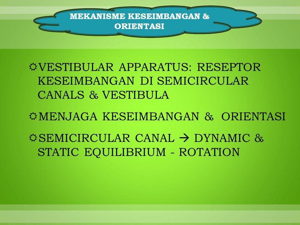  VESTIBULAR APPARATUS: RESEPTOR KESEIMBANGAN DI SEMICIRCULAR CANALS & VESTIBULA  MENJAGA KESEIMBANGAN & ORIENTASI  SEMICIRCULAR CANAL  DYNAMIC & STATIC EQUILIBRIUM - ROTATION MEKANISME KESEIMBANGAN & ORIENTASI