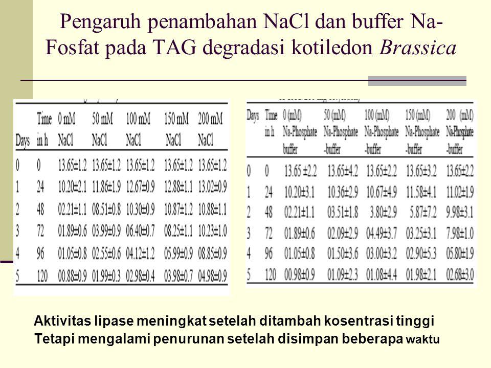 Pengaruh penambahan NaCl dan buffer Na- Fosfat pada TAG degradasi kotiledon Brassica Aktivitas lipase meningkat setelah ditambah kosentrasi tinggi Tet
