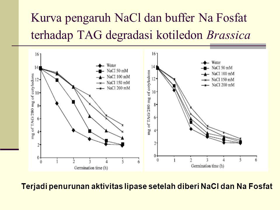 Kurva pengaruh NaCl dan buffer Na Fosfat terhadap TAG degradasi kotiledon Brassica Terjadi penurunan aktivitas lipase setelah diberi NaCl dan Na Fosfat