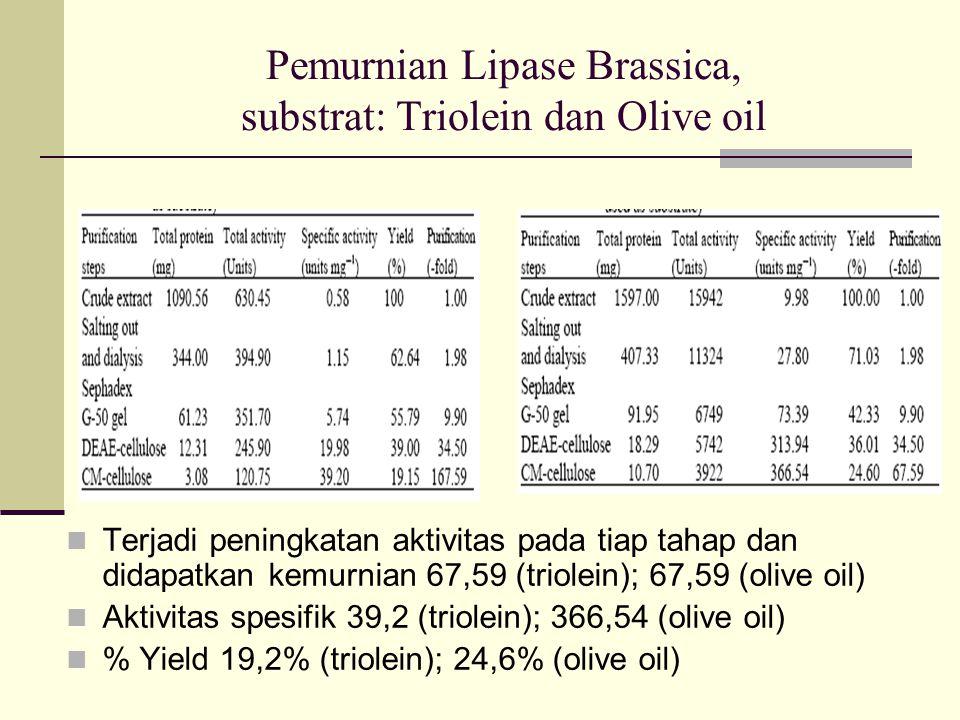 Pemurnian Lipase Brassica, substrat: Triolein dan Olive oil Terjadi peningkatan aktivitas pada tiap tahap dan didapatkan kemurnian 67,59 (triolein); 67,59 (olive oil) Aktivitas spesifik 39,2 (triolein); 366,54 (olive oil) % Yield 19,2% (triolein); 24,6% (olive oil)