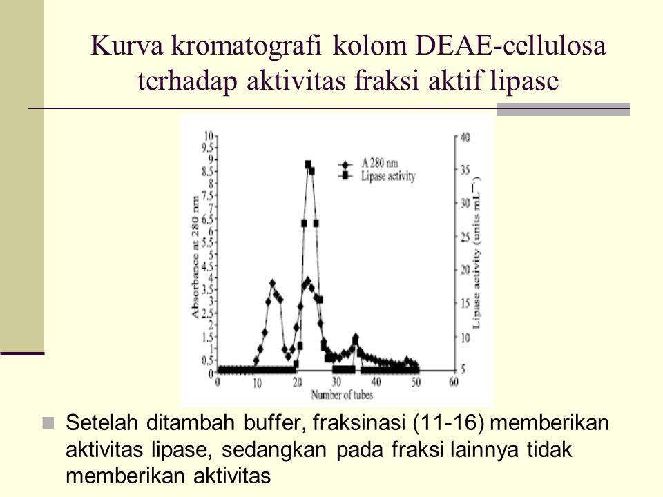 Kurva kromatografi kolom DEAE-cellulosa terhadap aktivitas fraksi aktif lipase Setelah ditambah buffer, fraksinasi (11-16) memberikan aktivitas lipase, sedangkan pada fraksi lainnya tidak memberikan aktivitas