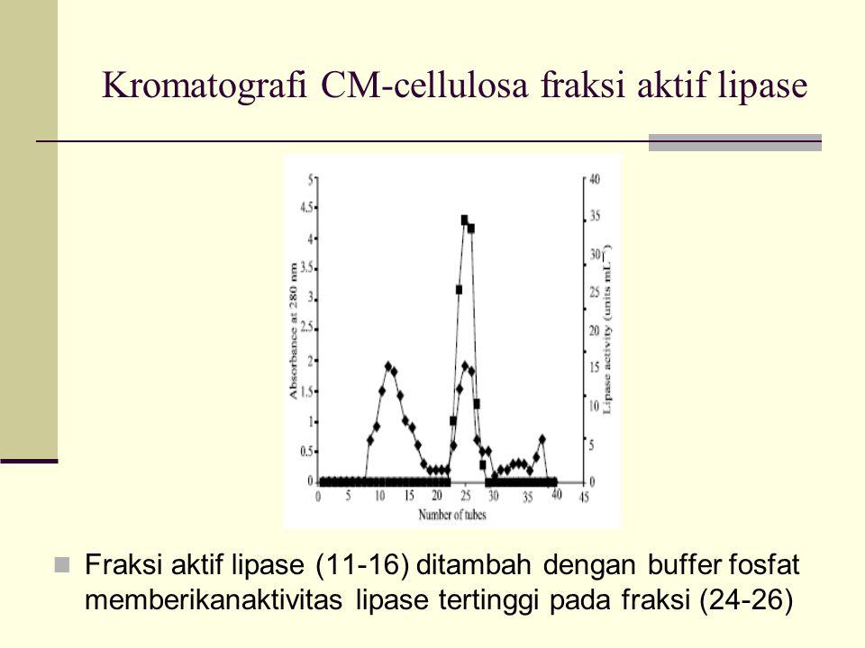 Kromatografi CM-cellulosa fraksi aktif lipase Fraksi aktif lipase (11-16) ditambah dengan buffer fosfat memberikanaktivitas lipase tertinggi pada fraksi (24-26)