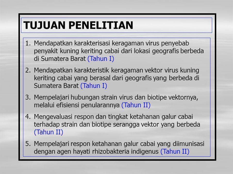 TUJUAN PENELITIAN 1.Mendapatkan karakterisasi keragaman virus penyebab penyakit kuning keriting cabai dari lokasi geografis berbeda di Sumatera Barat