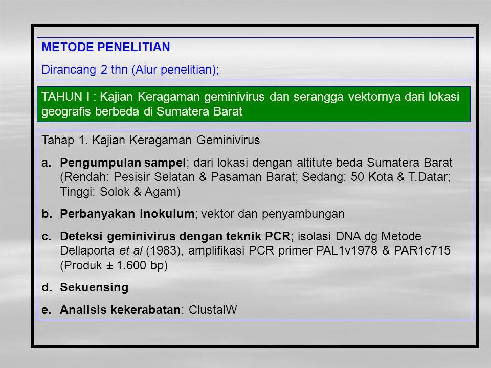 TAHUN I : Kajian Keragaman geminivirus dan serangga vektornya dari lokasi geografis berbeda di Sumatera Barat Tahap 1. Kajian Keragaman Geminivirus a.