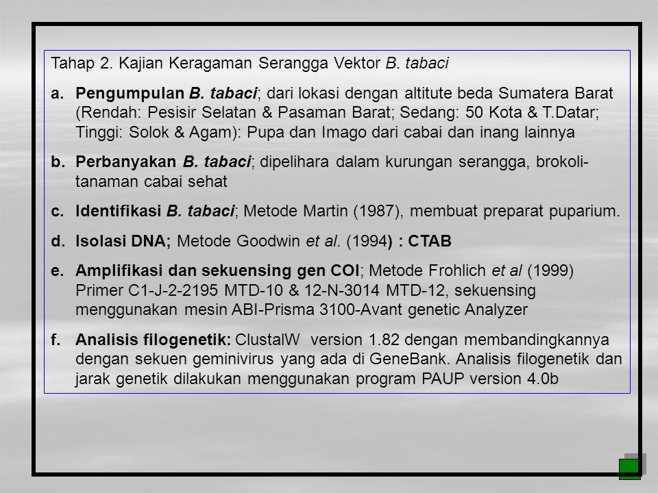 Tahap 2. Kajian Keragaman Serangga Vektor B. tabaci a.Pengumpulan B. tabaci; dari lokasi dengan altitute beda Sumatera Barat (Rendah: Pesisir Selatan