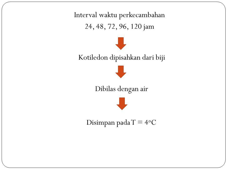 Interval waktu perkecambahan 24, 48, 72, 96, 120 jam Kotiledon dipisahkan dari biji Dibilas dengan air Disimpan pada T = 4 o C