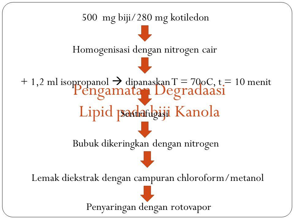 Pengamatan Degradaasi Lipid pada biji Kanola 500 mg biji/280 mg kotiledon Homogenisasi dengan nitrogen cair + 1,2 ml isopropanol  dipanaskan T = 70oC, t = 10 menit Sentrifugasi Bubuk dikeringkan dengan nitrogen Lemak diekstrak dengan campuran chloroform/metanol Penyaringan dengan rotovapor