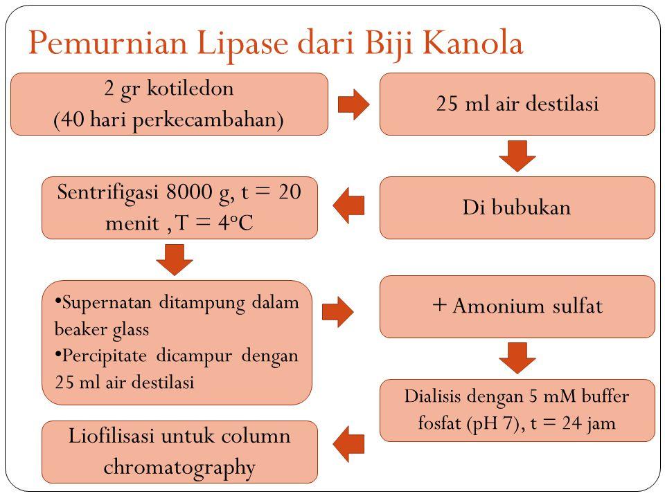 Pemurnian Lipase dari Biji Kanola 2 gr kotiledon (40 hari perkecambahan) 25 ml air destilasi Di bubukan Sentrifigasi 8000 g, t = 20 menit, T = 4 o C Supernatan ditampung dalam beaker glass Percipitate dicampur dengan 25 ml air destilasi + Amonium sulfat Dialisis dengan 5 mM buffer fosfat (pH 7), t = 24 jam Liofilisasi untuk column chromatography