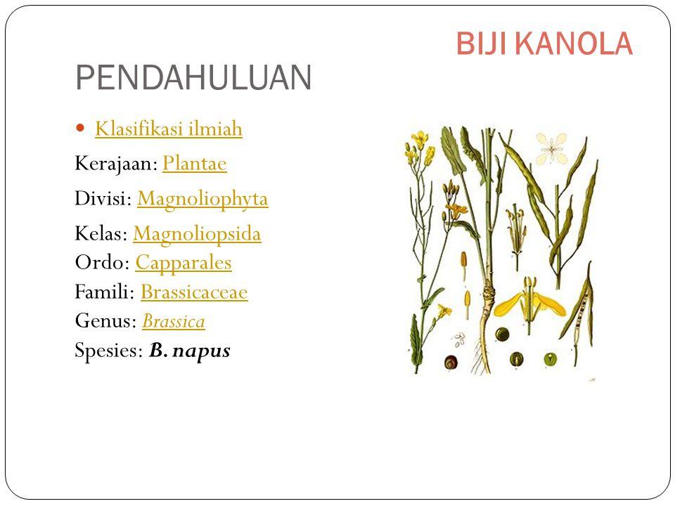 Klasifikasi ilmiah Kerajaan: PlantaePlantae Divisi: MagnoliophytaMagnoliophyta Kelas: Magnoliopsida Ordo: Capparales Famili: Brassicaceae Genus: Brassica Spesies: B.