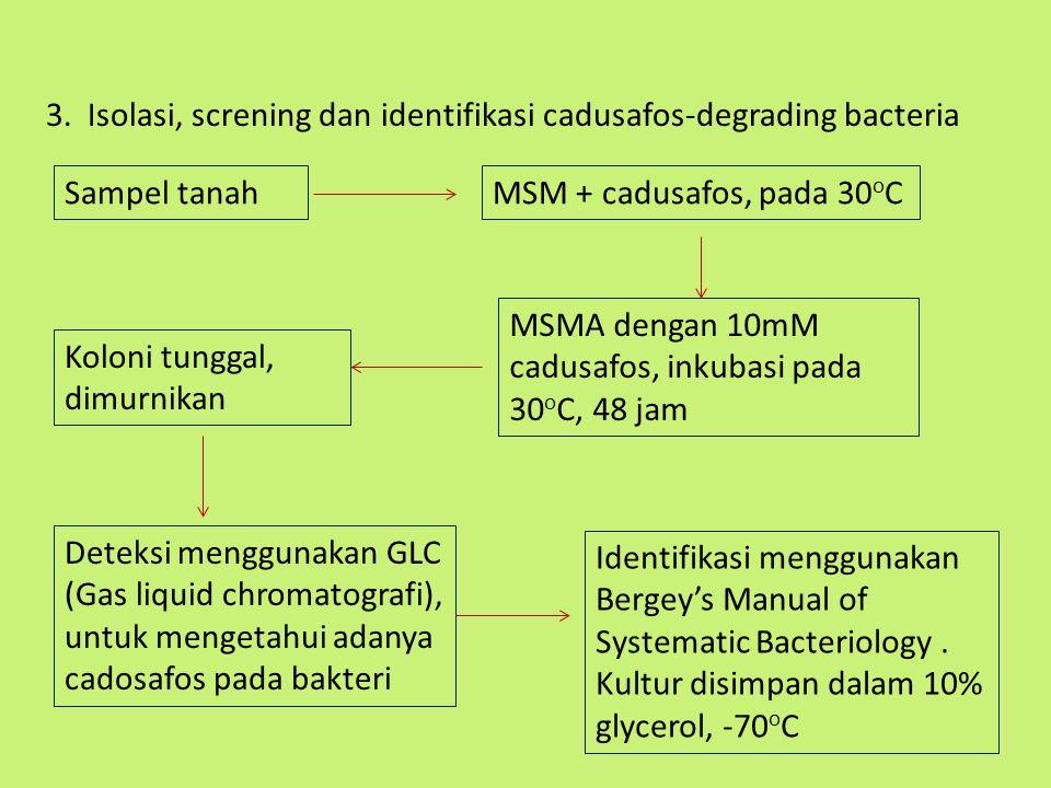 3. Isolasi, screning dan identifikasi cadusafos-degrading bacteria Sampel tanahMSM + cadusafos, pada 30 o C MSMA dengan 10mM cadusafos, inkubasi pada