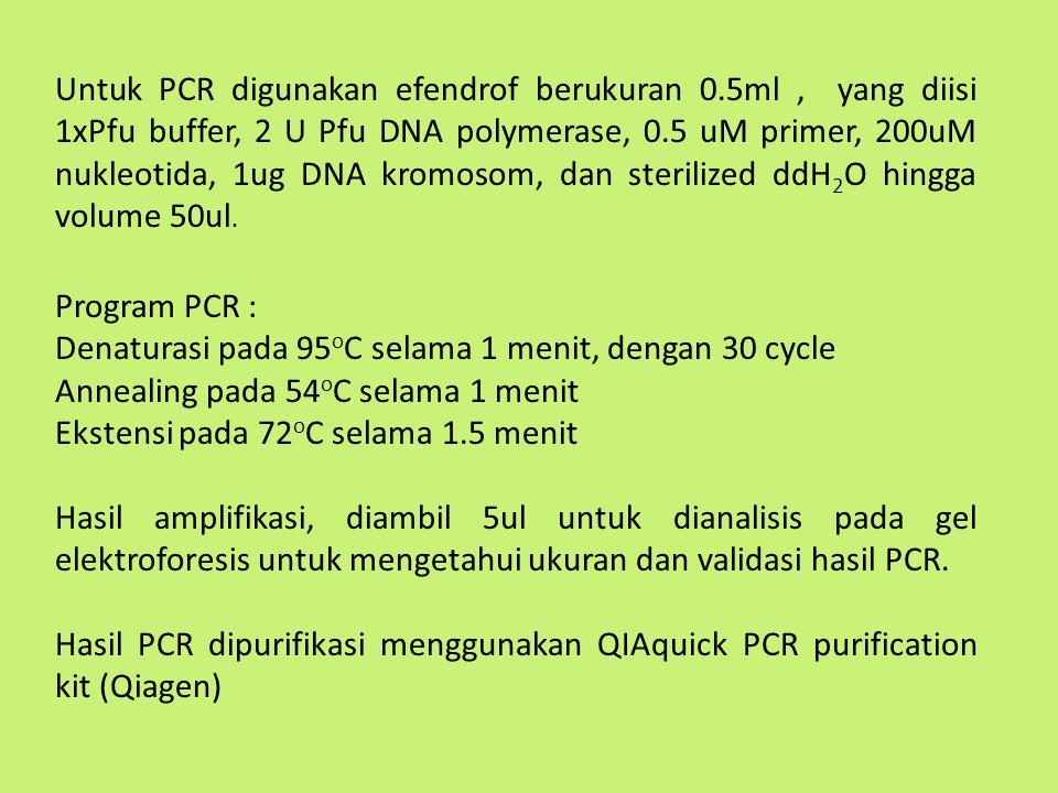 Untuk PCR digunakan efendrof berukuran 0.5ml, yang diisi 1xPfu buffer, 2 U Pfu DNA polymerase, 0.5 uM primer, 200uM nukleotida, 1ug DNA kromosom, dan