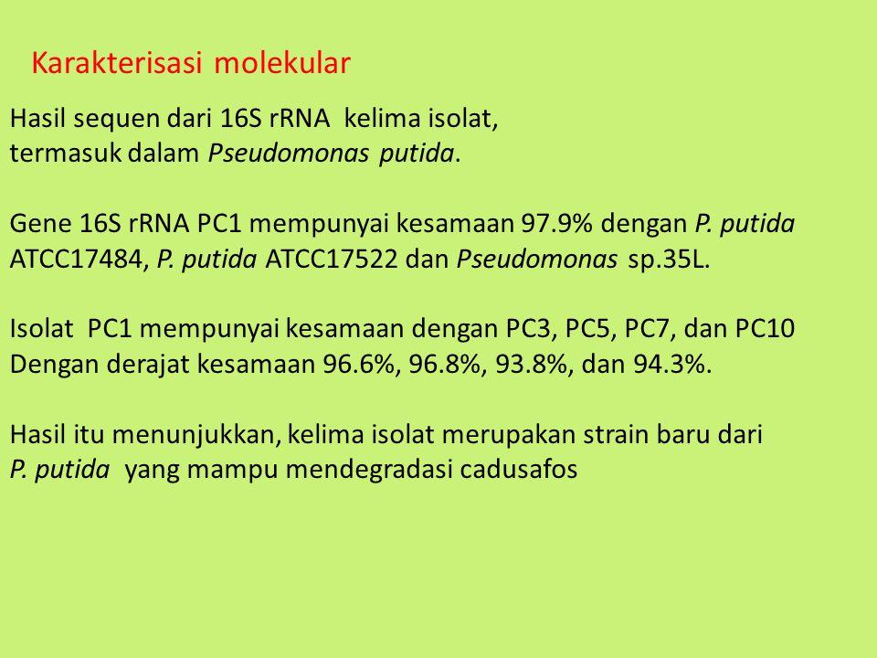 Hasil sequen dari 16S rRNA kelima isolat, termasuk dalam Pseudomonas putida. Gene 16S rRNA PC1 mempunyai kesamaan 97.9% dengan P. putida ATCC17484, P.