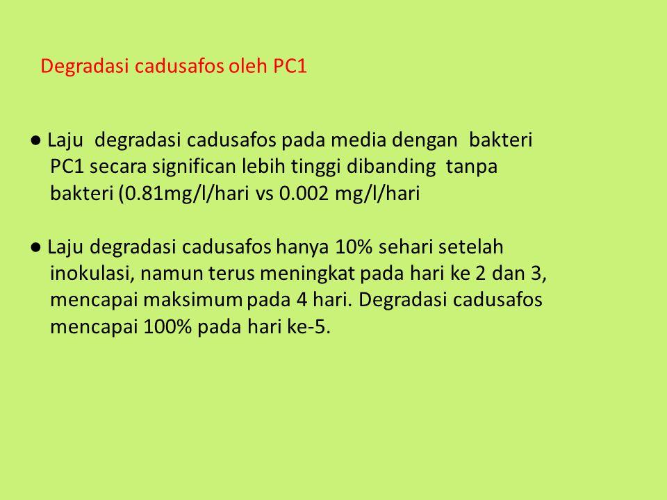 Degradasi cadusafos oleh PC1 ● Laju degradasi cadusafos pada media dengan bakteri PC1 secara significan lebih tinggi dibanding tanpa bakteri (0.81mg/l
