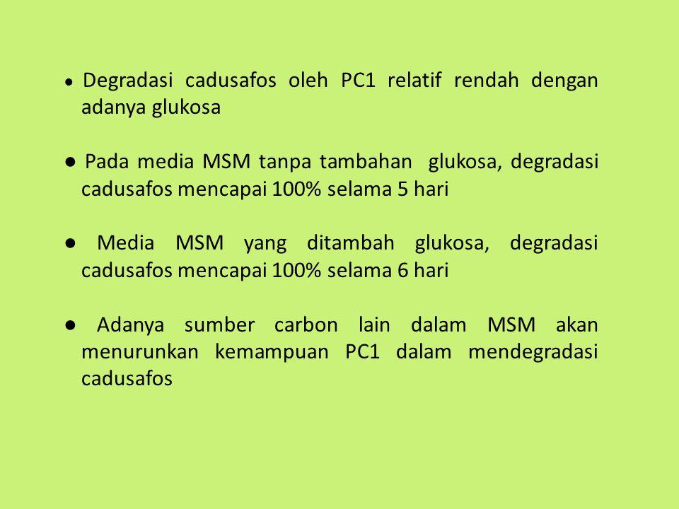● Degradasi cadusafos oleh PC1 relatif rendah dengan adanya glukosa ● Pada media MSM tanpa tambahan glukosa, degradasi cadusafos mencapai 100% selama