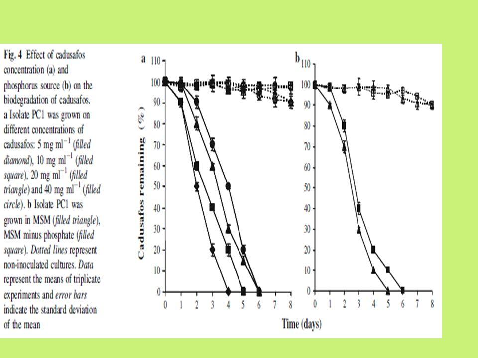 Biodegradation of cadusafos in soil by strain PC1 ● Laju degradasi cadusafos berbeda nyata pada kerapatan inokulum yang berbeda pada tanah non-steril ● Dengan kerapatan inokulum 2.1x10 6 cfu/g pada tanah steril dan non-steril, laju degradasi cadusafos oleh PC 1 sebesar 0.96 dan 1.1 mg/l/hari ● Laju degradasi cadusafos 0.66 mg/l/hari pada tanah steril dengan kerapatan bakteri 2.1x10 3 cfu/g ● Laju degradasi cadusafos 0.08mg/l/hari pada tanah non- steril dengan kerapatan bakteri 2.1x10 3 cfu/g