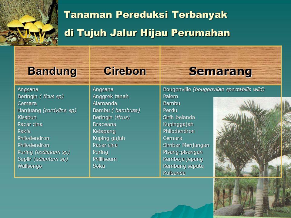 Tanaman Pereduksi Terbanyak di Tujuh Jalur Hijau Perumahan BandungCirebonSemarangAngsana Beringin ( ficus sp) Cemara Hanjuang (cordyline sp) Kisabun P