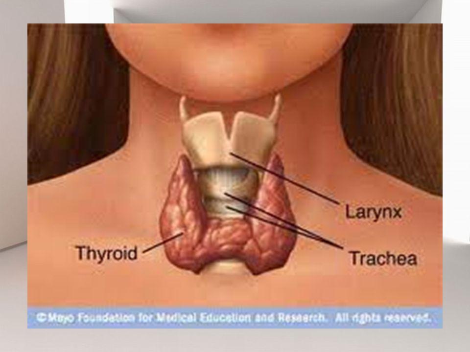 Gangguan rasa nyaman nyeri berhubungan dengan dengan tindakan bedah terhadap jaringan/otot dan edema pasca operasi.