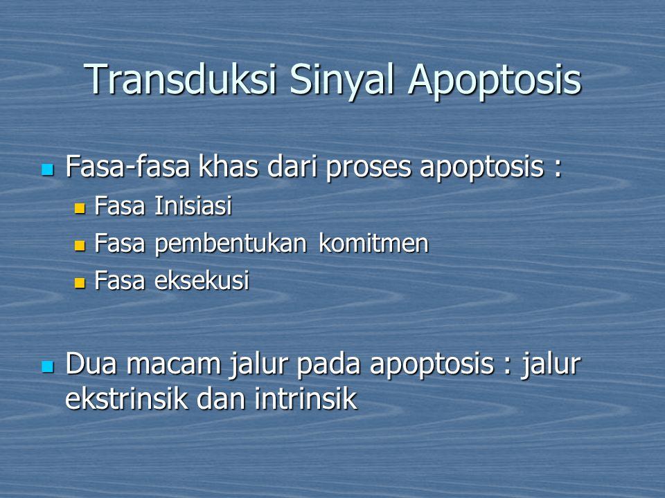 Transduksi Sinyal Apoptosis Fasa-fasa khas dari proses apoptosis : Fasa-fasa khas dari proses apoptosis : Fasa Inisiasi Fasa Inisiasi Fasa pembentukan