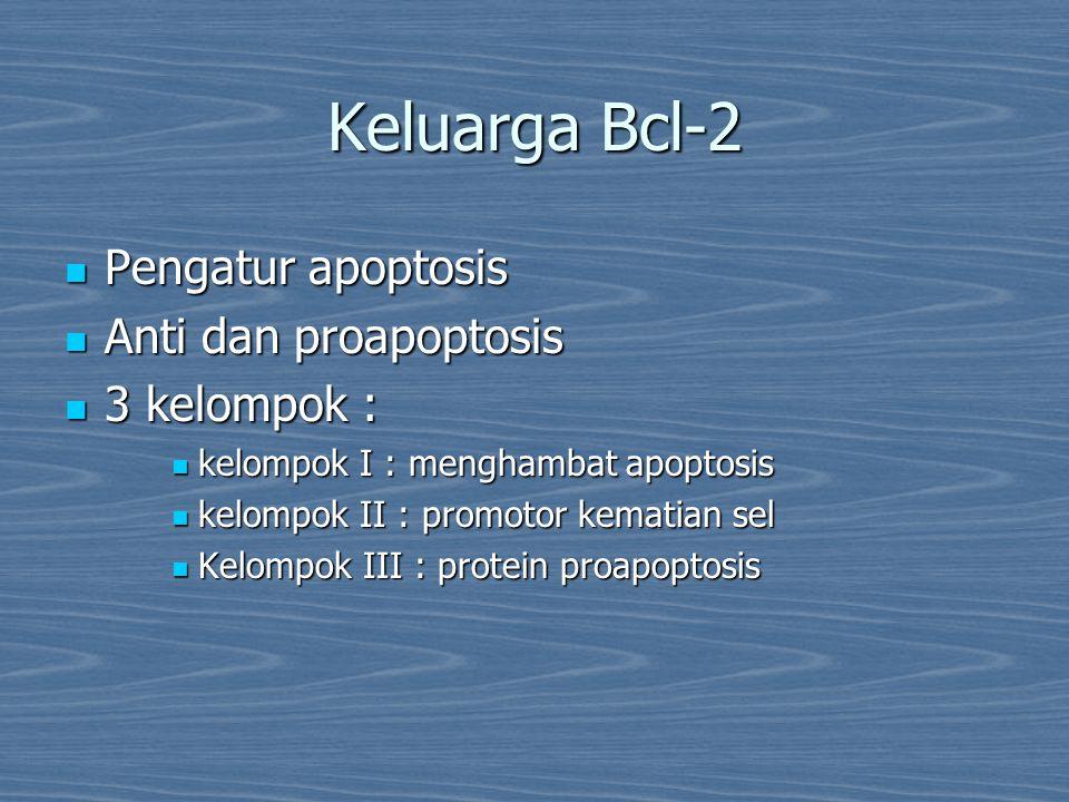 Keluarga Bcl-2 Pengatur apoptosis Pengatur apoptosis Anti dan proapoptosis Anti dan proapoptosis 3 kelompok : 3 kelompok : kelompok I : menghambat apo