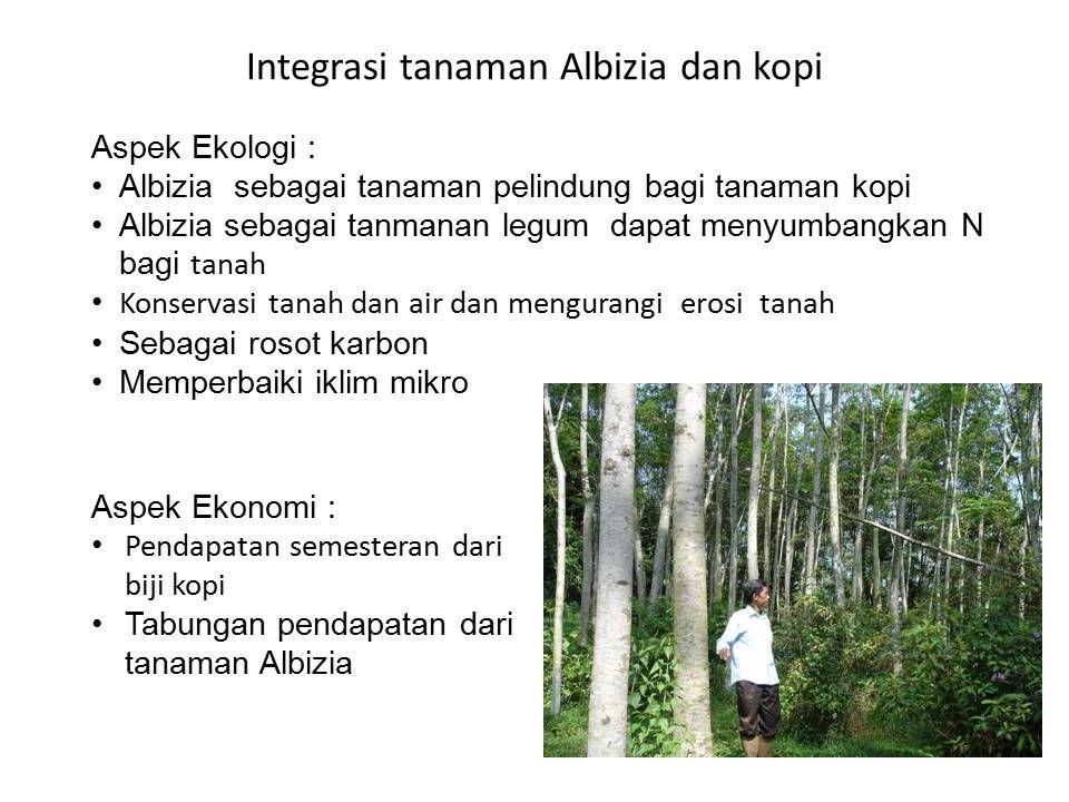 Integrasi tanaman Albizia dan kopi Aspek Ekologi : Albizia sebagai tanaman pelindung bagi tanaman kopi Albizia sebagai tanmanan legum dapat menyumbang
