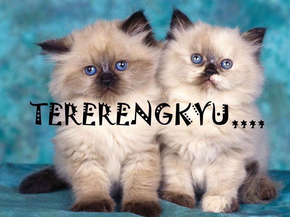 TERERENGKYU,,,,