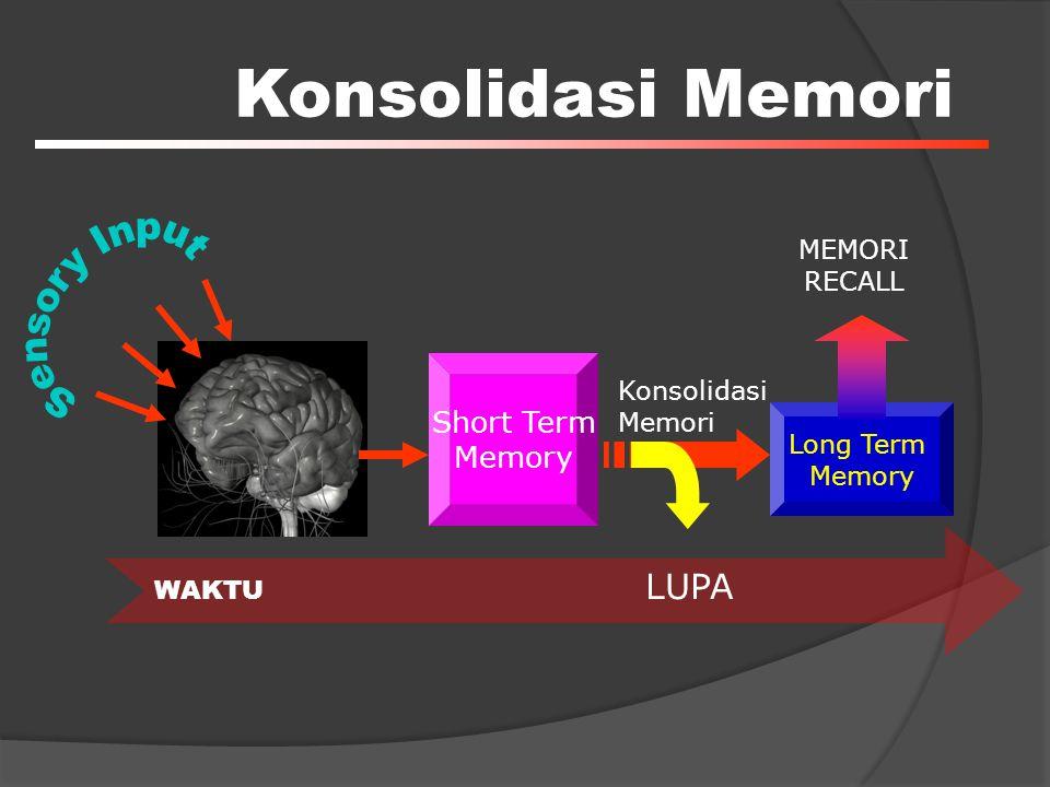 Konsolidasi Memori Short Term Memory Long Term Memory WAKTU MEMORI RECALL Konsolidasi Memori LUPA