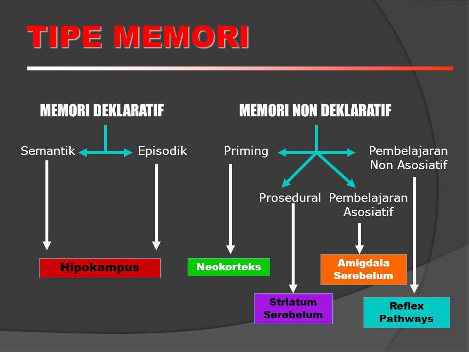 TIPE MEMORI MEMORI DEKLARATIFMEMORI NON DEKLARATIF SemantikEpisodikPriming ProseduralPembelajaran Asosiatif Pembelajaran Non Asosiatif Hipokampus Neokorteks Striatum Serebelum Amigdala Serebelum Reflex Pathways