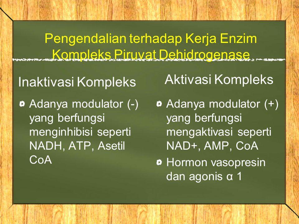 Pengendalian terhadap Kerja Enzim Kompleks Piruvat Dehidrogenase Inaktivasi Kompleks Adanya modulator (-) yang berfungsi menginhibisi seperti NADH, ATP, Asetil CoA Aktivasi Kompleks Adanya modulator (+) yang berfungsi mengaktivasi seperti NAD+, AMP, CoA Hormon vasopresin dan agonis α 1