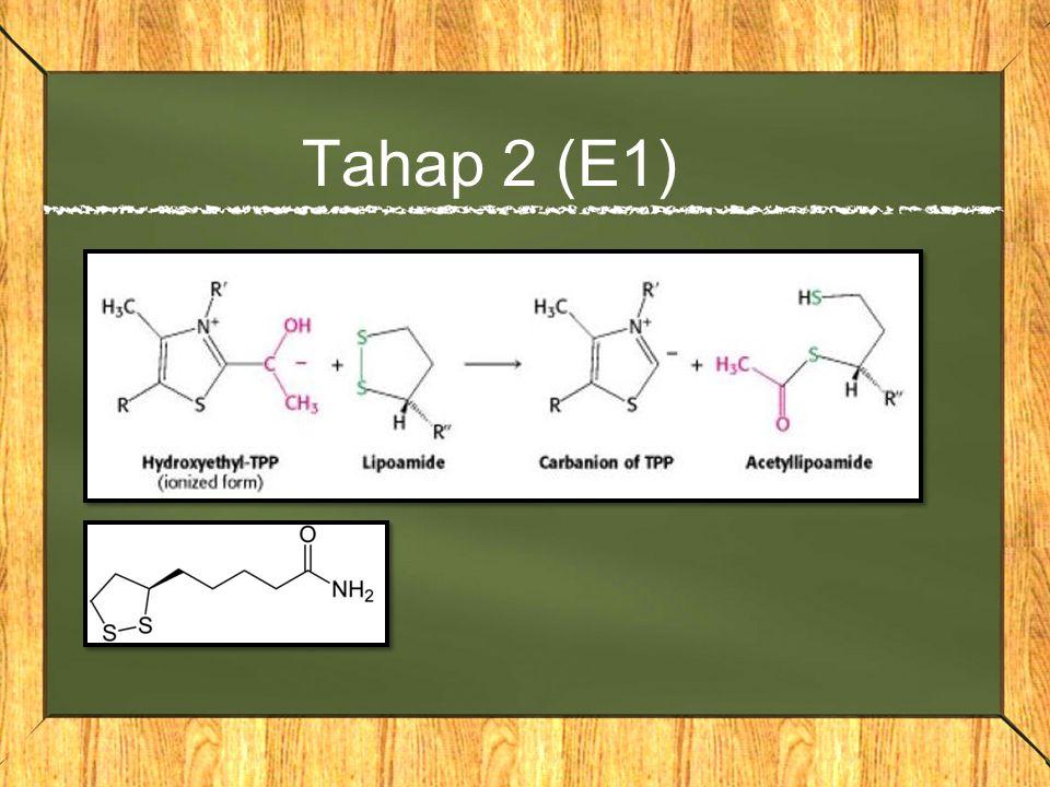 Tahap 2 (E1)