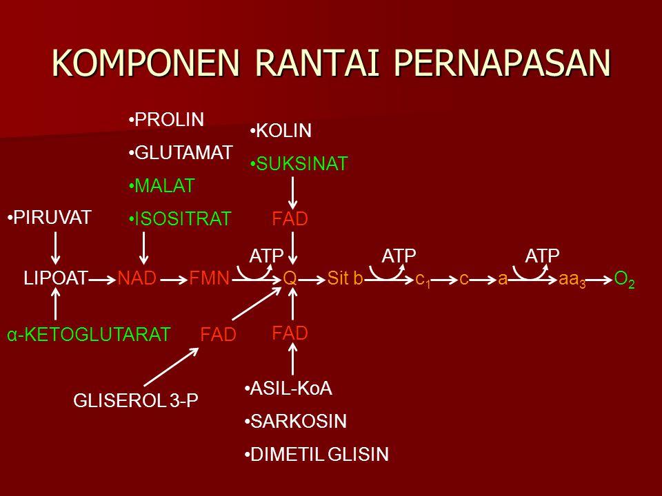 KOMPONEN RANTAI PERNAPASAN NADFMNQSit bc1c1 caaa 3 O2O2 LIPOAT ATP FAD KOLIN SUKSINAT ASIL-KoA SARKOSIN DIMETIL GLISIN GLISEROL 3-P α-KETOGLUTARAT PIR